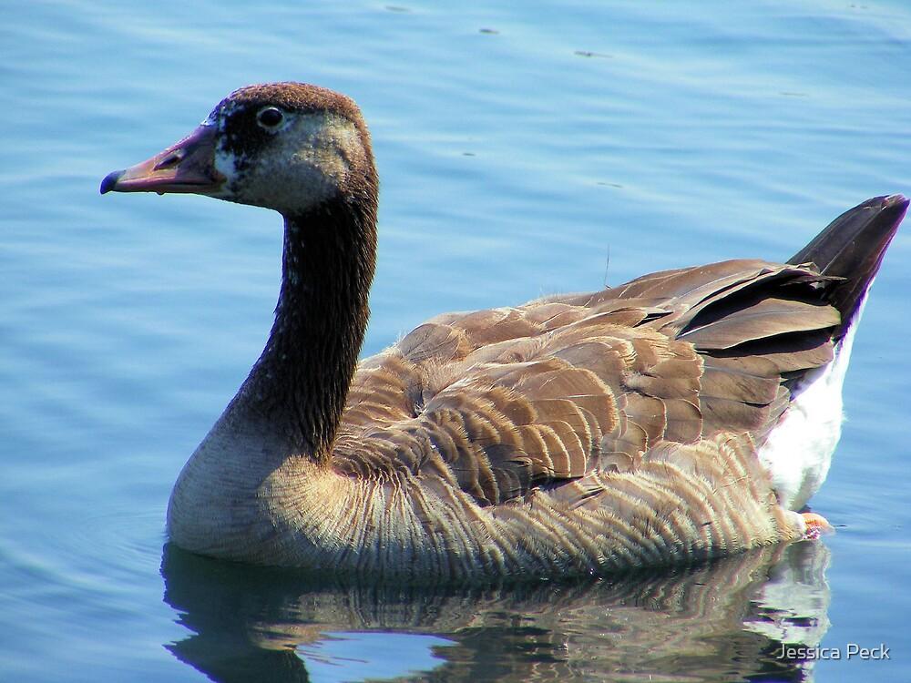 Odd Duck by Jessica Peck