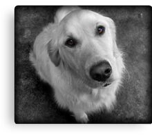 Please Give Me A Biscuit Canvas Print