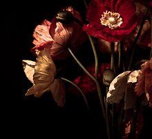 Unfolding III by Steve Granger
