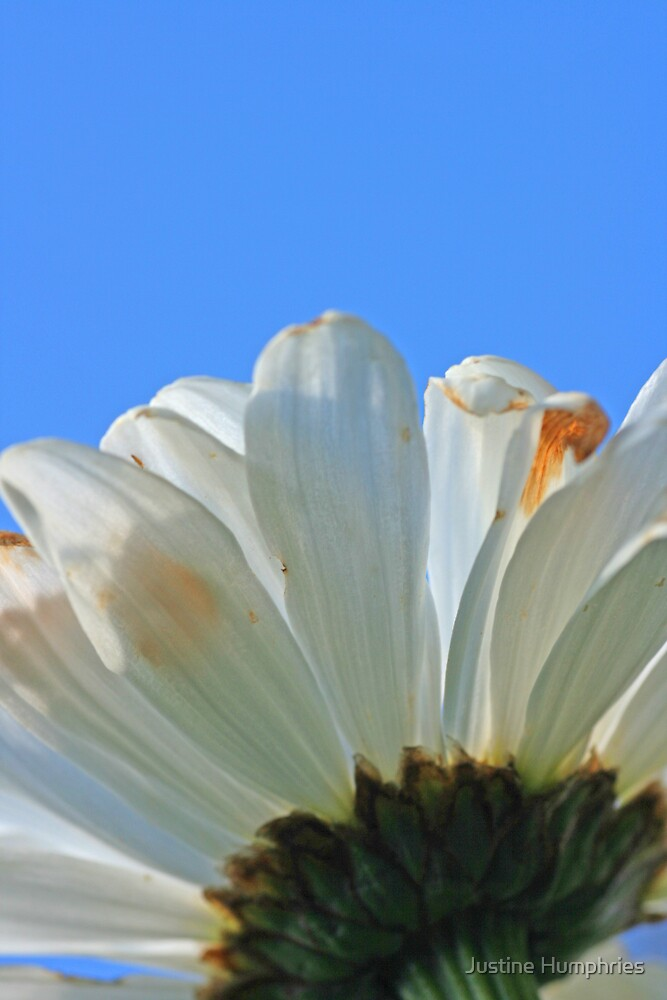 Blue Sky by Justine Humphries