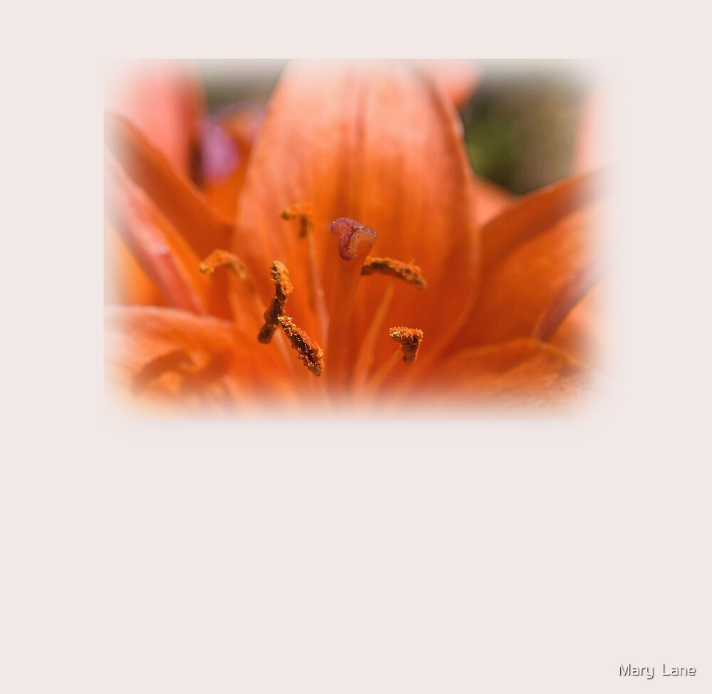 Red Lily Card by Mary  Lane