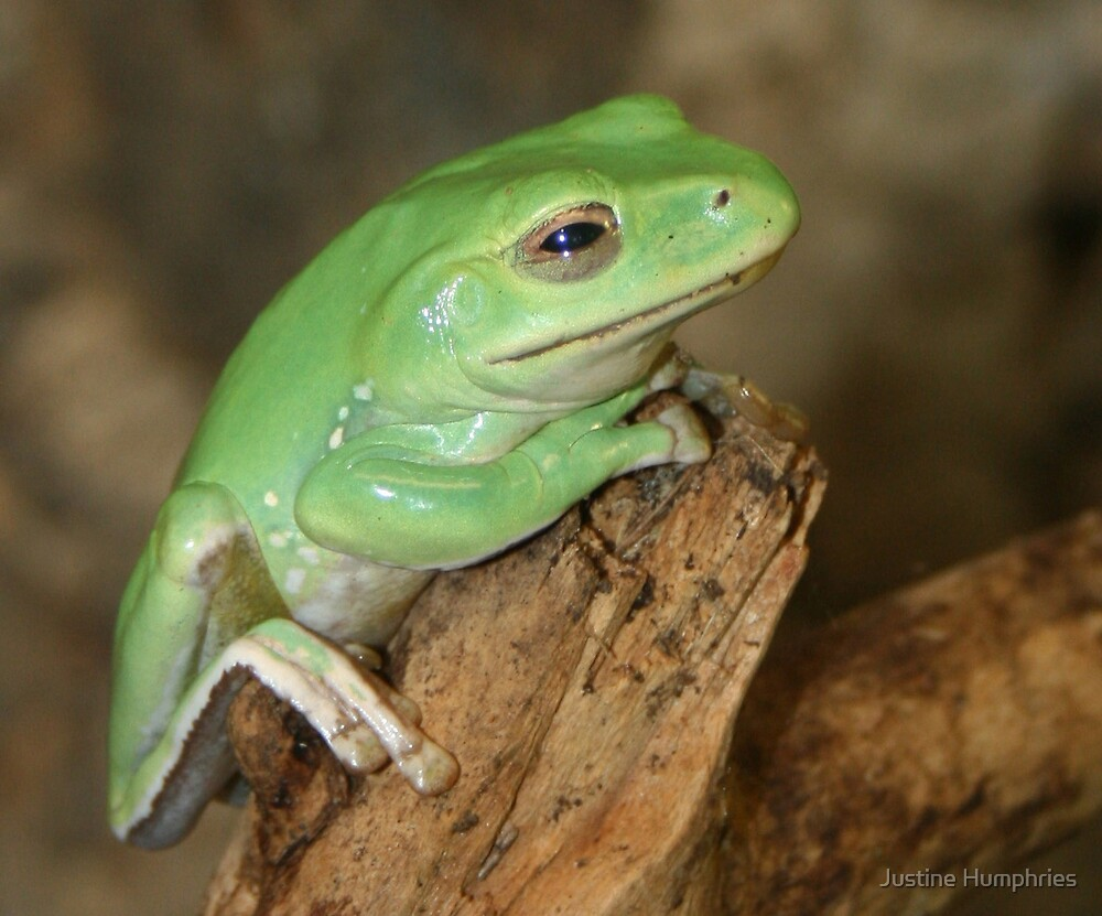 Little green frog by Justine Humphries
