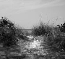 Coquina Beach Path by beatnik