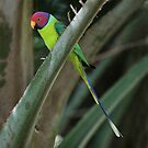 Parrot by Julie Just