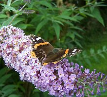 Butterfly at work by Stevie Toye