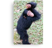 Cheerful Chimp Canvas Print