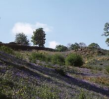 Hillside of Bluebells above Rydal Water Rydal Lake District England 198405200012 by Fred Mitchell