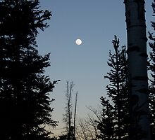 Moon through Trees by Barbara Olney