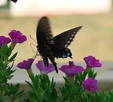 Butterfly Landing on a Flower by ekehoe
