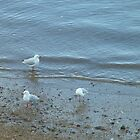 Seagulls at the Seashore by KittenFlower