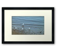 Seagulls at the Seashore Framed Print