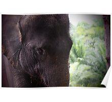 Elephant portrait 1 Poster
