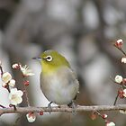 animal-bird by photoj