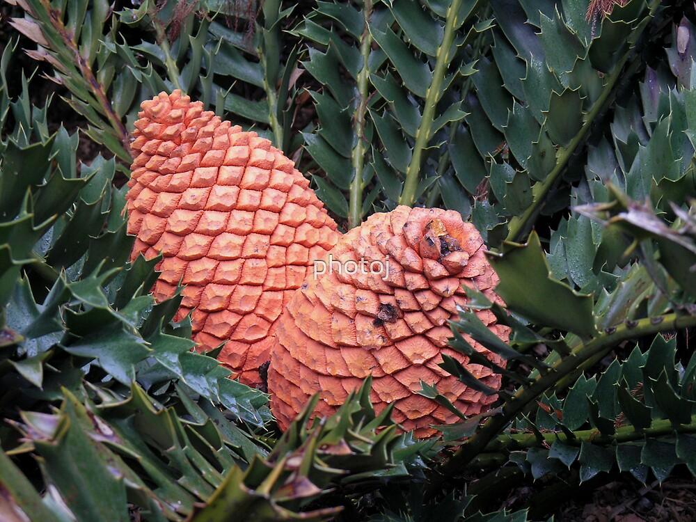 photoj, Native Plant by photoj