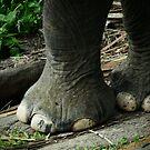 Elephant feet by fab2can