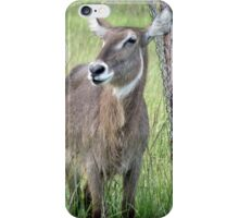 Female Waterbuck iPhone Case/Skin