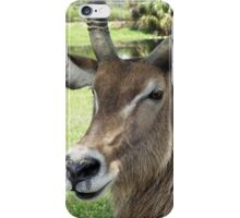 Waterbuck iPhone Case/Skin