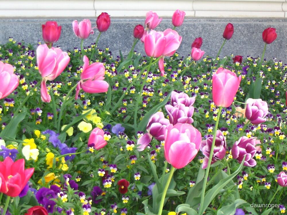 Spring Tulips by dawnroper