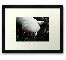 precious petunia Framed Print