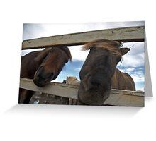 Icelandic Horses Greeting Card