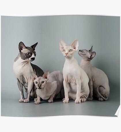 Flesh Cats Poster