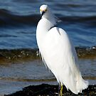 Egret by levipie
