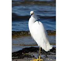 Egret Photographic Print