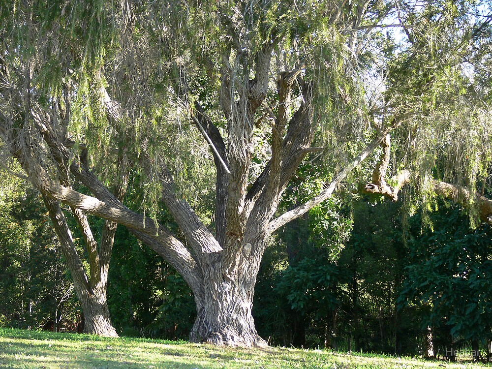 Just a beautiful old tree!!! by Heabar