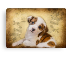 Cutest Puppy Mix Breed  Canvas Print