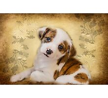 Cutest Puppy Mix Breed  Photographic Print