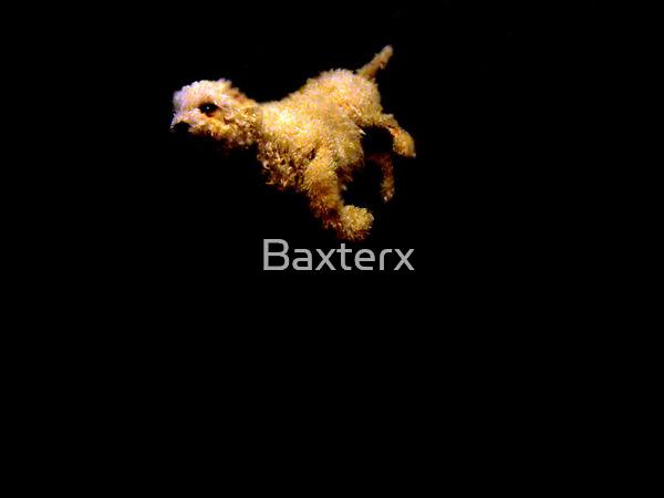 Canaitive by Baxterx