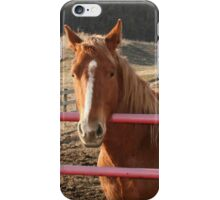 Horse at the Fence iPhone Case/Skin