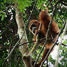 Orangutan 2 by fab2can