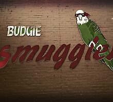 Smuggling of Budgies by Kelly McGill