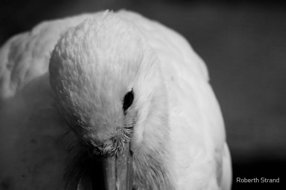 Sad bird by Roberth Strand