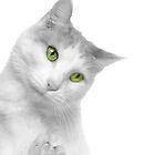Cat Closeup by Jim  Hughes