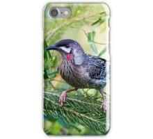 Red Wattle Bird 2 iPhone Case/Skin