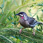 Red Wattle Bird 2 by mncphotography