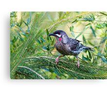 Red Wattle Bird 2 Canvas Print