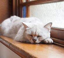 Sleeping cat by fab2can
