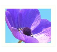 Purple Anenome On Blue Sky Art Print