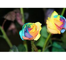 Multi-Color Roses Photographic Print