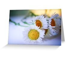 Dreamy Daisies Greeting Card