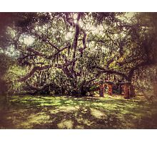 Greyfield Live Oak Photographic Print
