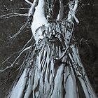 Up and Up - Big Gum Tree by Clare Colins