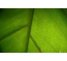 peace in paradise Photographic Print