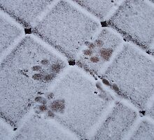Paw Prints by Michelle Hitt