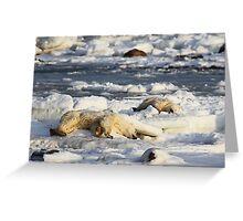Polar Bear Mother & Cub Grooming  Greeting Card