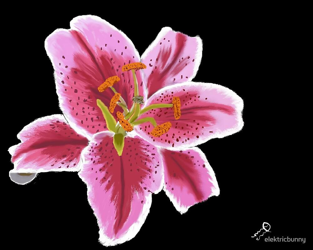 Lily by elektricbunny