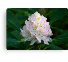 Great Rhododendron Canvas Print